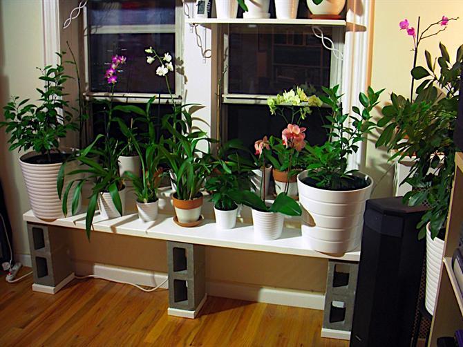 trồng hoa bên bệ cửa sổ cho nhà đẹp và mát mẻ